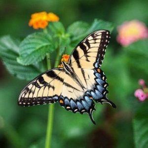 Campingplatz Clos De La Chaume: Schmetterlingsgärten