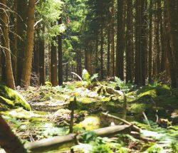Campingplatz Clos De La Chaume: Wälder der Vogesen