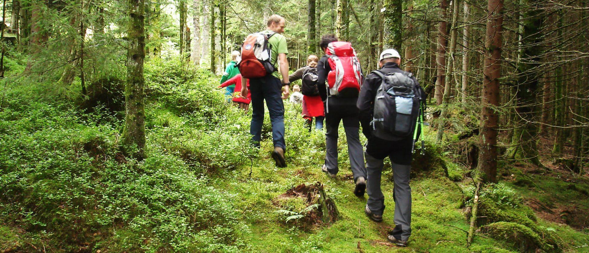 Camping Clos De La Chaume : Balade Nature En Famille Accompagnée Au Camping Vosges
